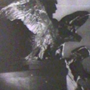 L'aigle impérial